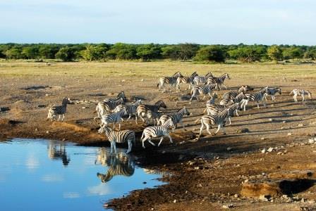 Balade Namibienne 5